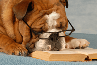 Dog with head resting on a book